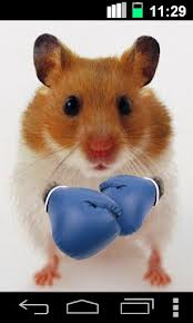Hamster boxing