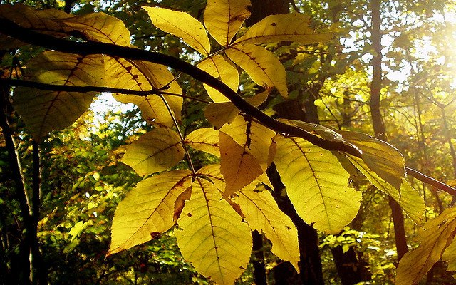 autumn leaves by billy liar