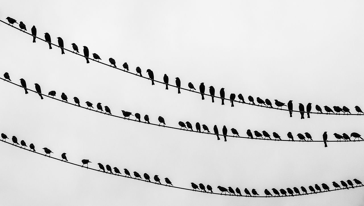 1280px-Birds_on_the_wire_-_crop