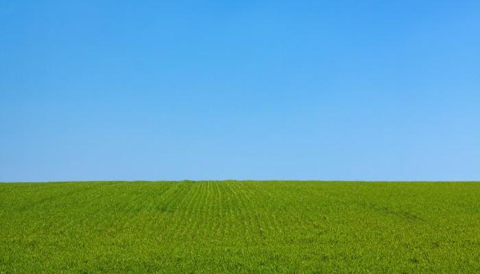 grass sky green blue